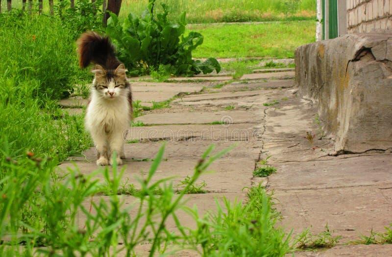 猫爱s 免版税库存照片