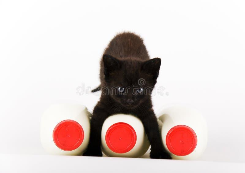 猫牛奶 免版税库存图片