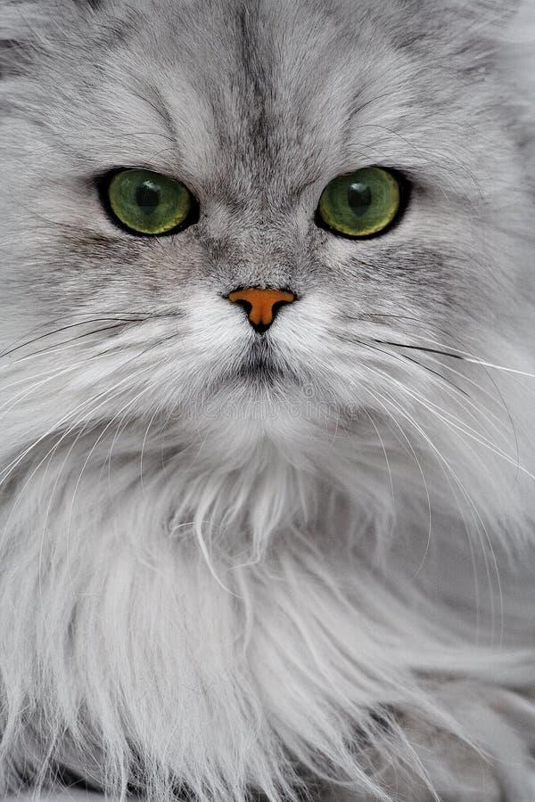 猫特写镜头纵向 免版税库存图片