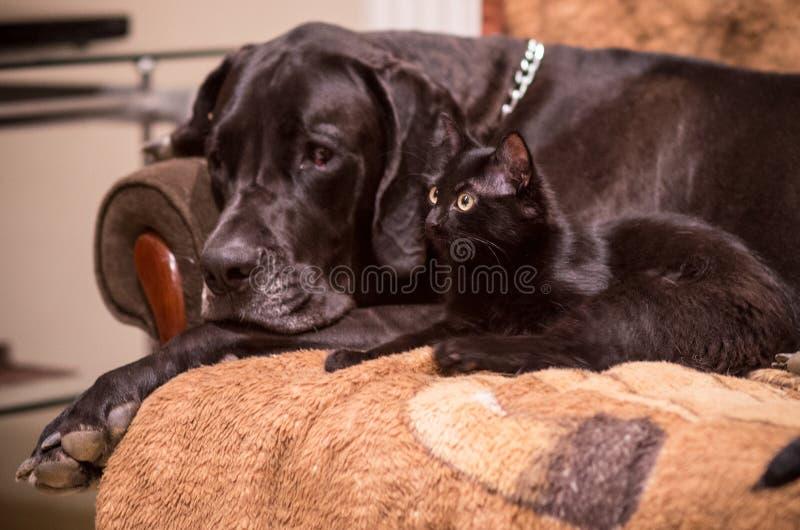 猫狗友谊 图库摄影