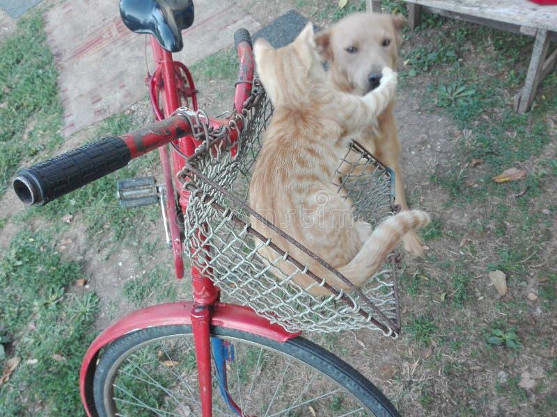 猫狗自行车 免版税库存图片