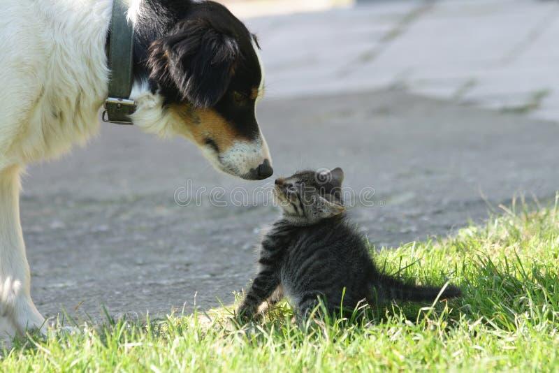 猫狗 免版税库存图片