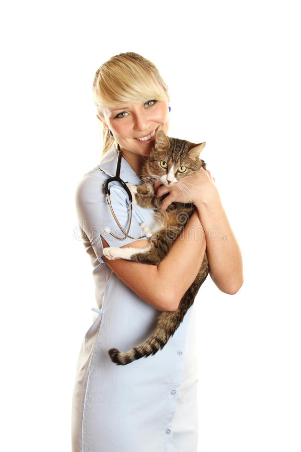 猫狩医 免版税库存照片