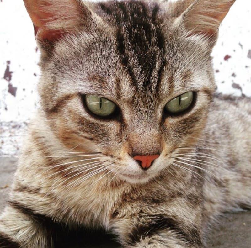 猫狩猎 免版税库存照片