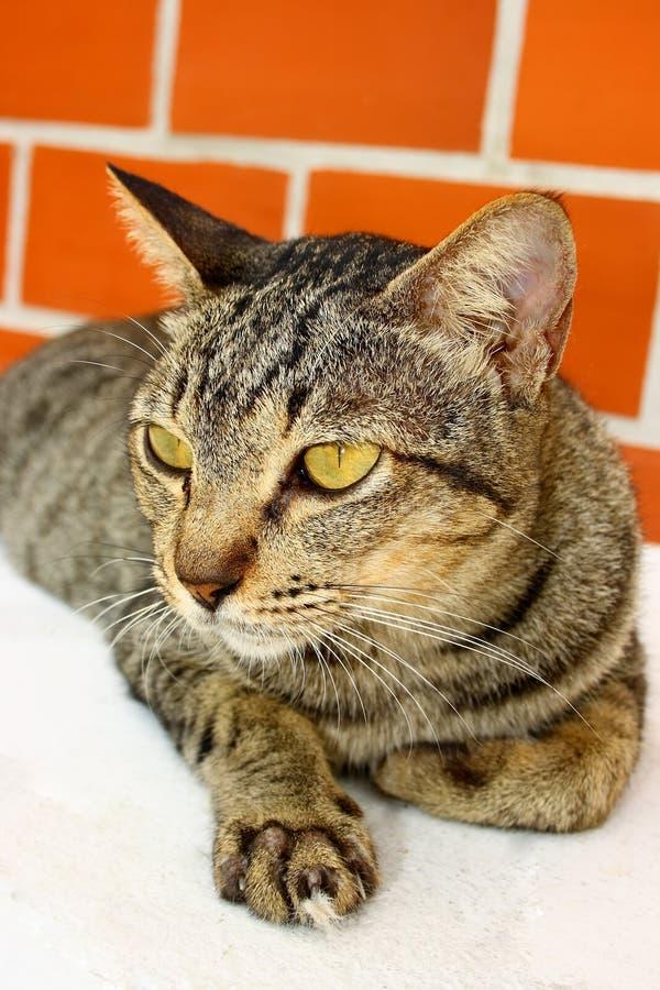 猫猎人 免版税库存照片