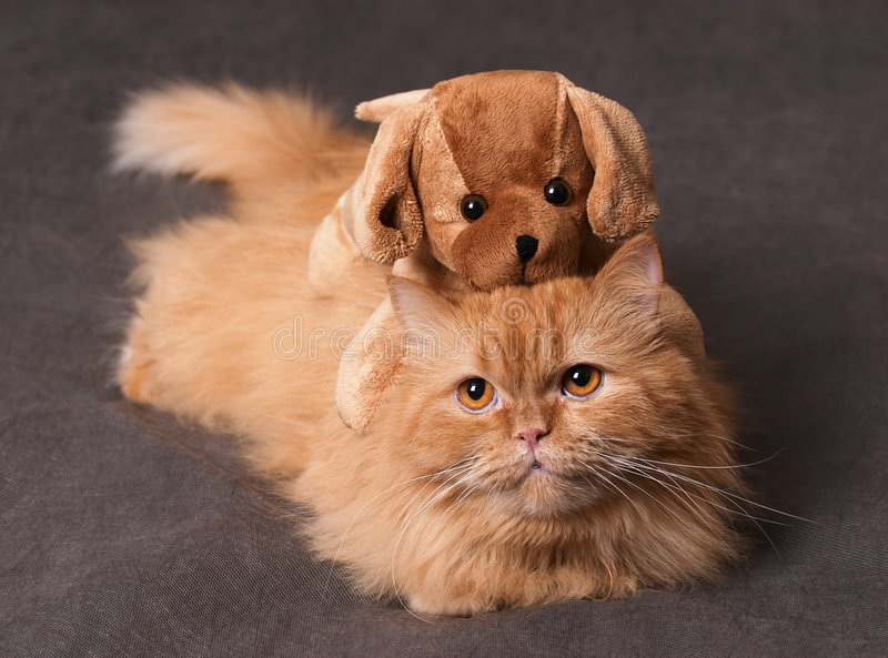 猫玩具 库存照片