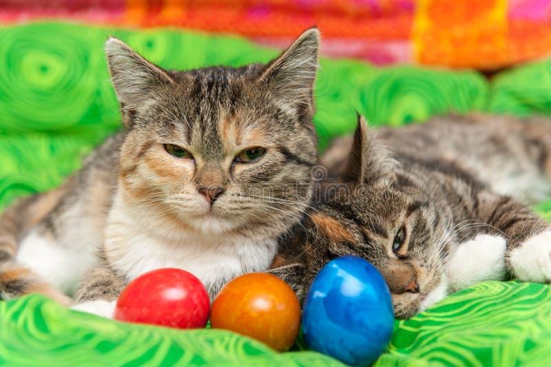 猫用五颜六色的复活节彩蛋 库存图片