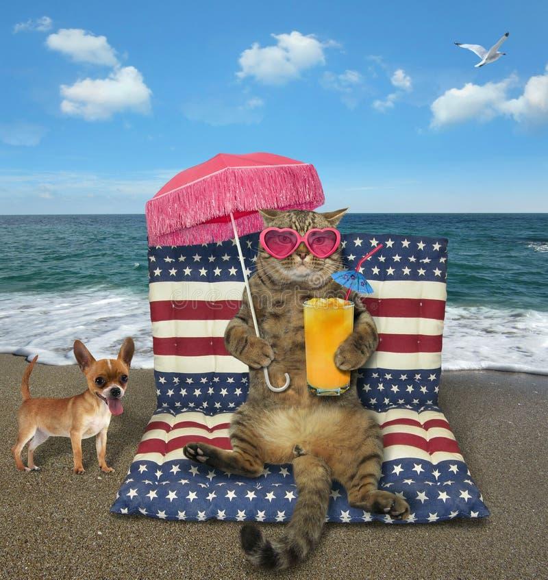 猫用汁液坐airbed的  免版税库存图片