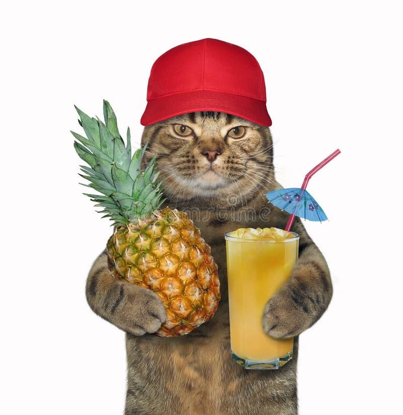 猫用菠萝和汁液 免版税库存照片