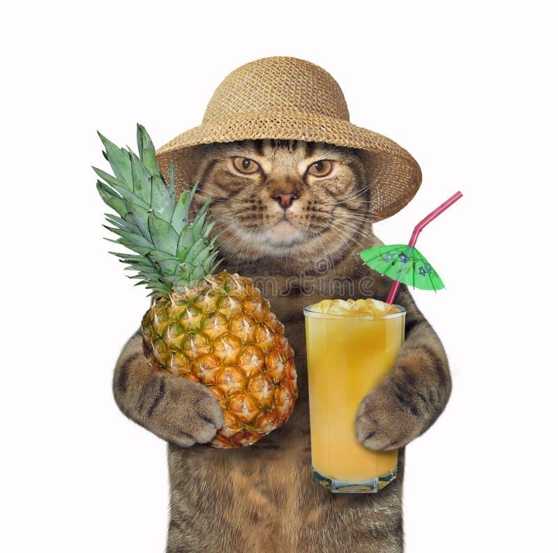 猫用菠萝和汁液2 图库摄影