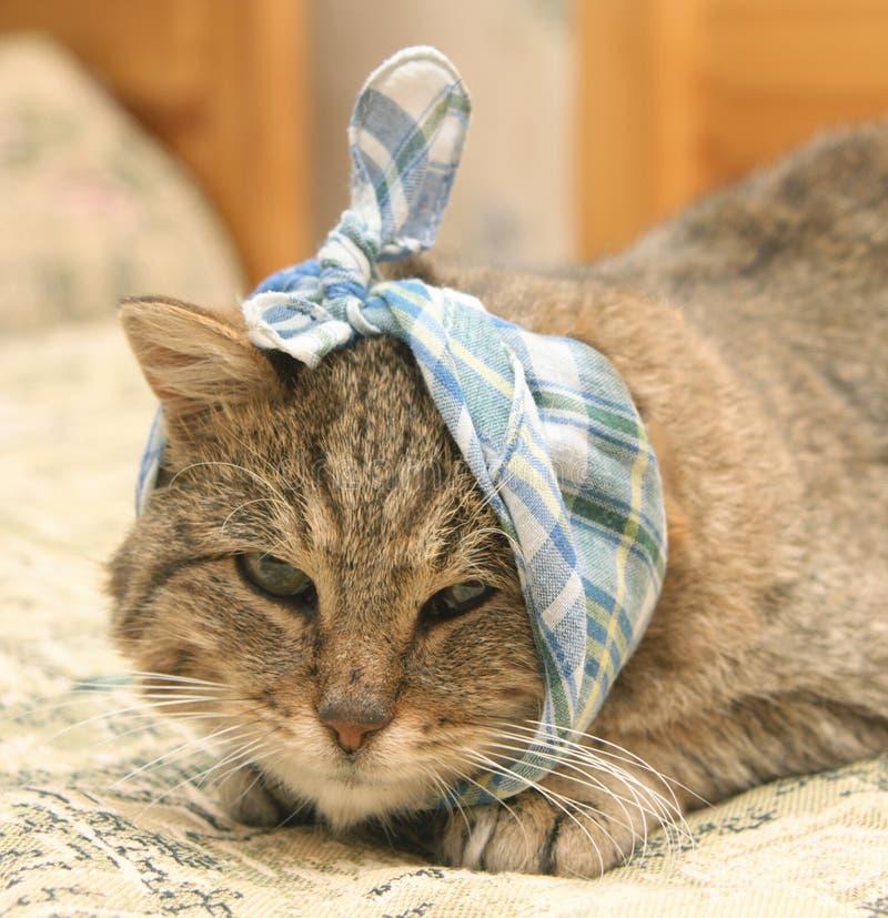 猫病残 免版税库存图片