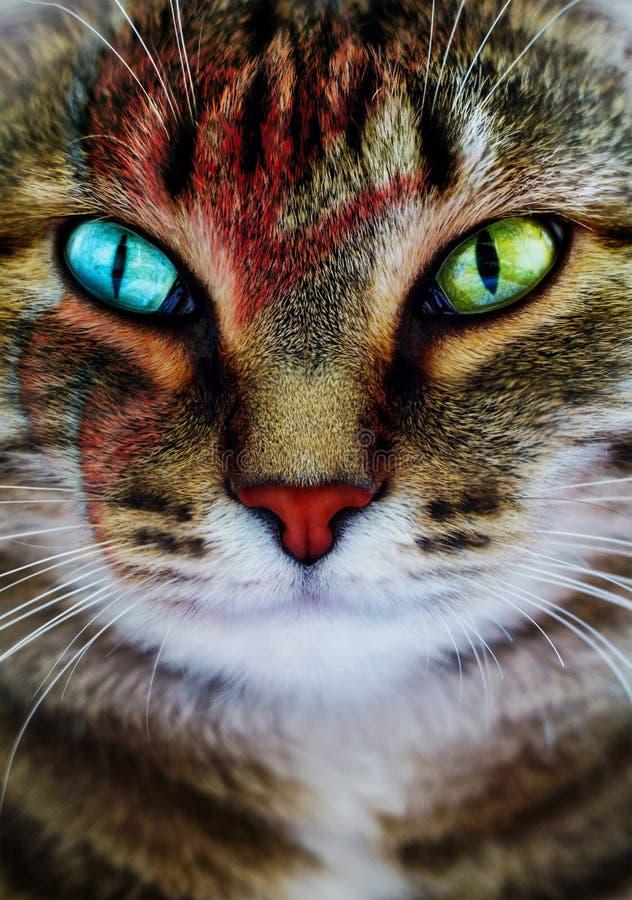 猫的创造性的画象 库存照片