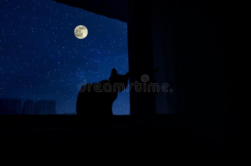 猫的剪影的暗室坐窗口在晚上 库存图片