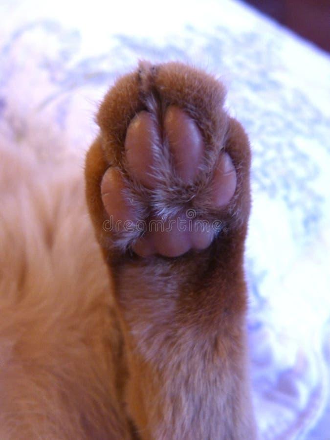 猫的爪子 免版税库存照片