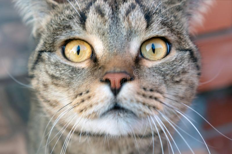 猫的眼睛 库存照片