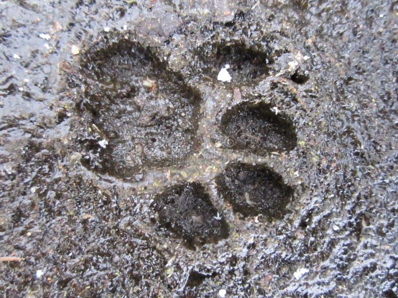 猫的脚印 免版税库存照片