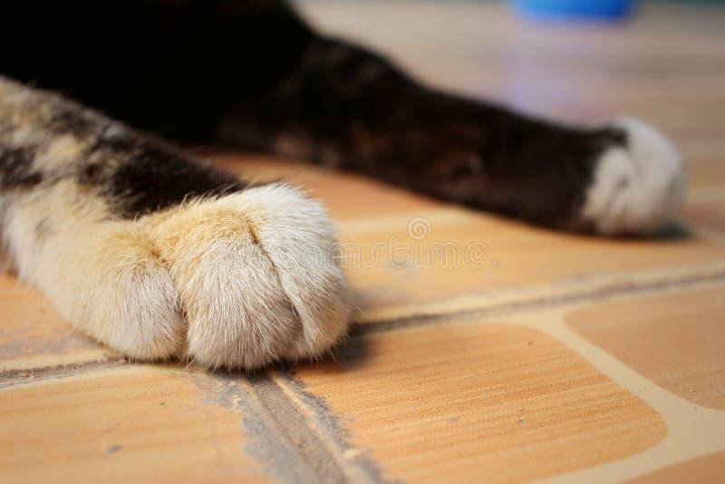猫的脚在公园睡觉 图库摄影