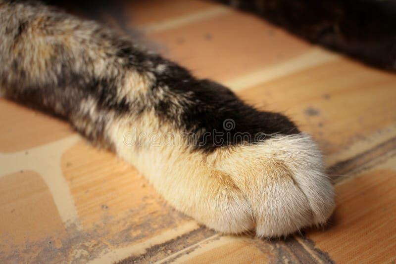 猫的脚在公园睡觉 免版税图库摄影