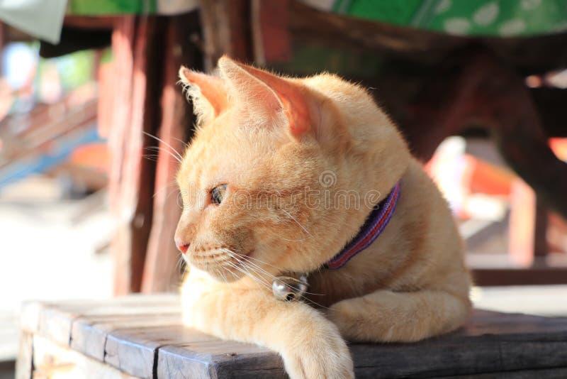 猫监护人海岛 免版税库存图片
