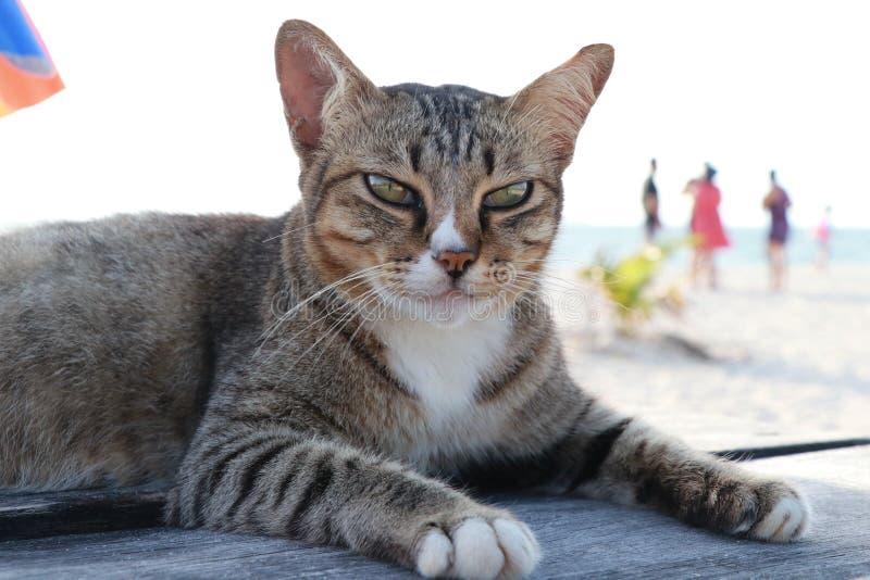 猫监护人海岛 图库摄影