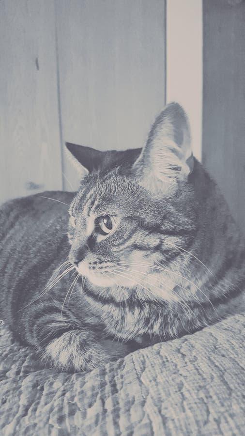 猫相当美好的乐趣 库存图片
