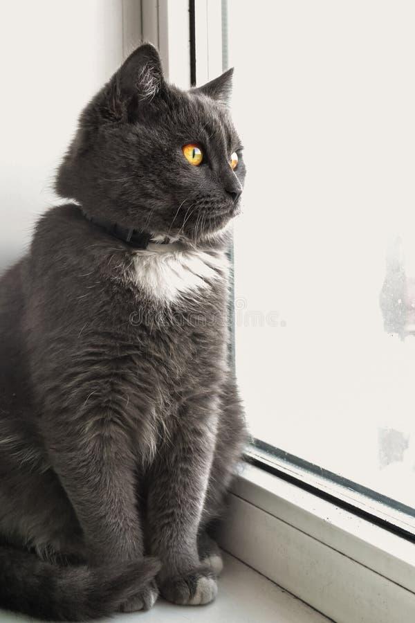 猫看窗口 免版税库存照片