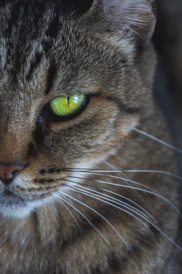 猫眼绿色 免版税图库摄影