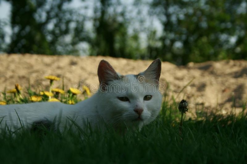 猫眼 免版税库存图片