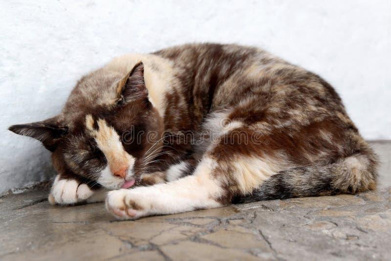 猫睡眠的照片在地板上的 库存图片