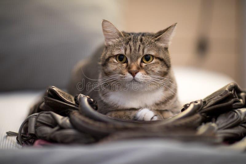 猫睡眠袋子天性动物可爱的宠物 库存图片