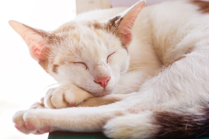 猫睡觉 睡觉猫的画象largly 猫休息 猫灰色 库存照片