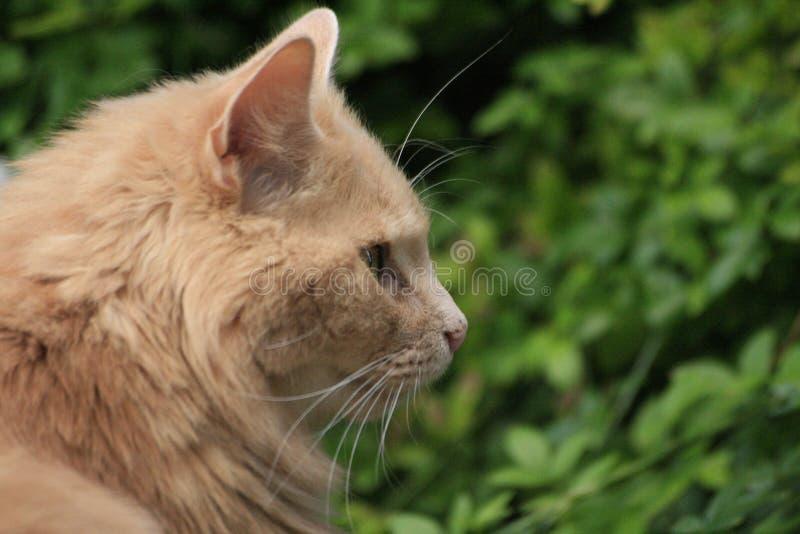 猫研究 库存照片