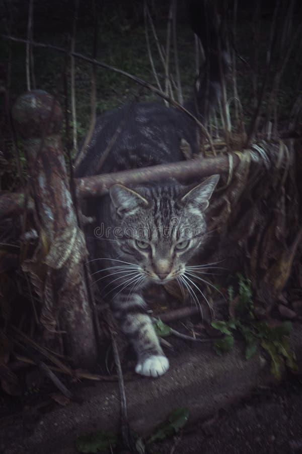 猫秋天 图库摄影