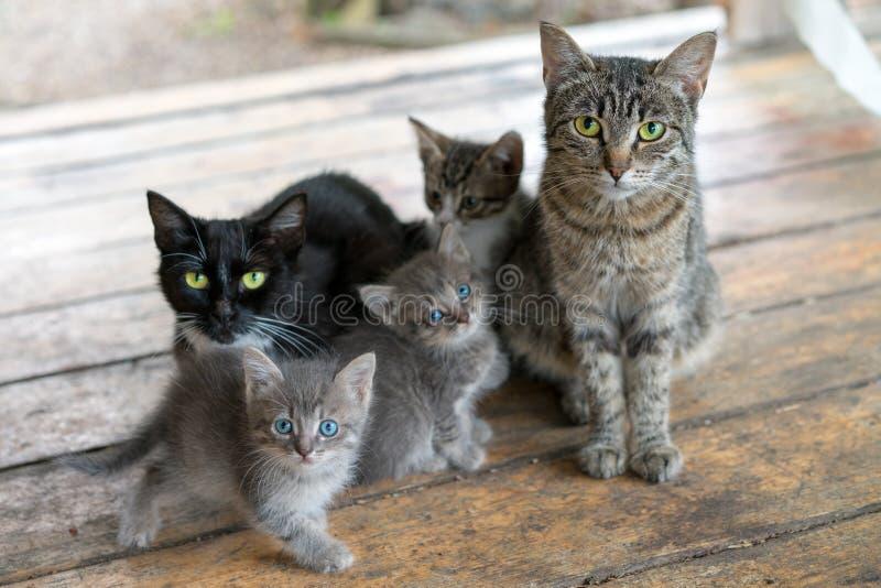 猫科 两只成人猫和三只小猫坐木板 免版税库存图片