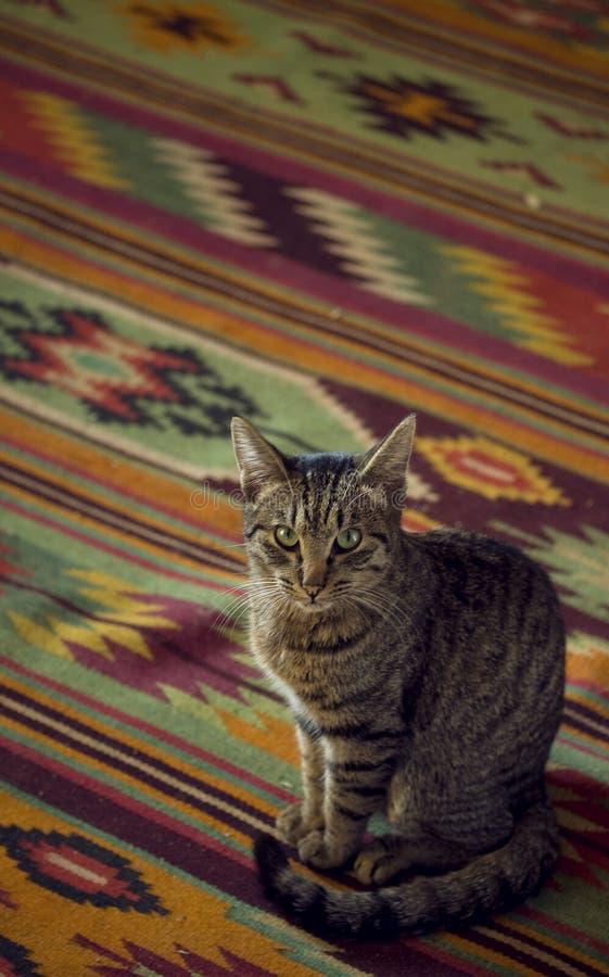 猫秘鲁人 库存照片