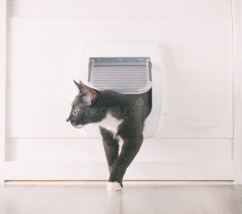 猫穿过猫门 图库摄影