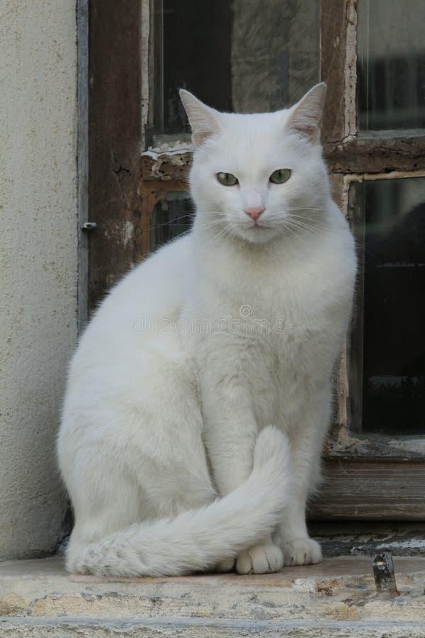 猫窗口 库存图片