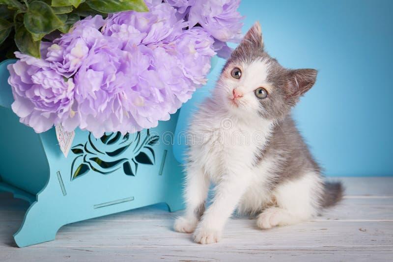 猫站立下朵花 库存照片