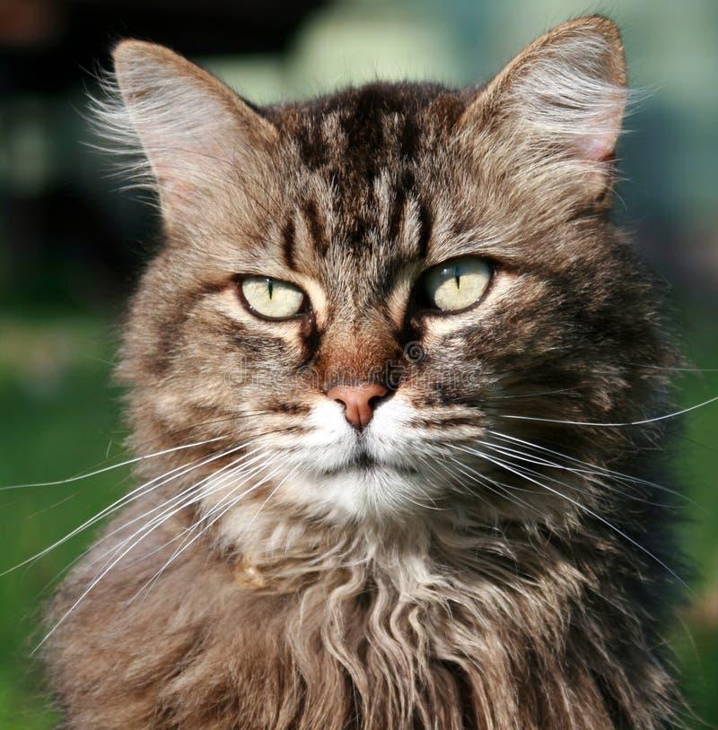 猫纵向年轻人 库存图片