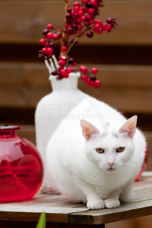 猫纵向白色 图库摄影