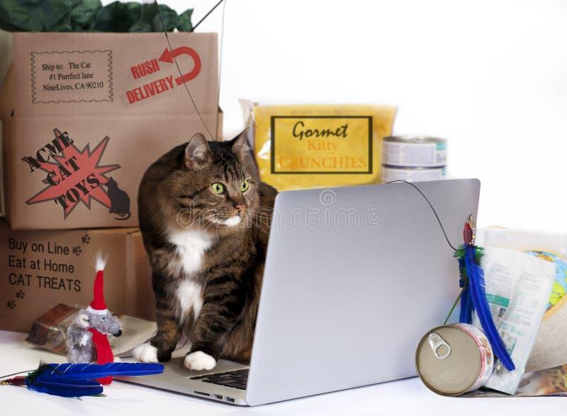 猫网上购物疯狂 免版税库存图片