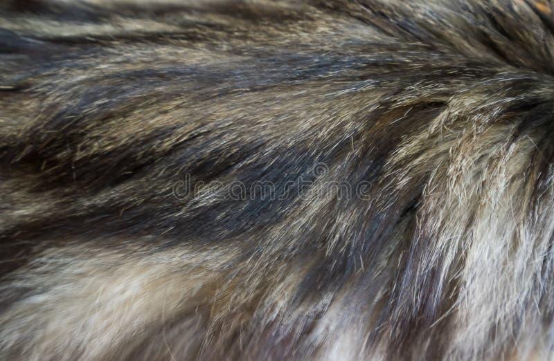 猫羊毛 库存图片