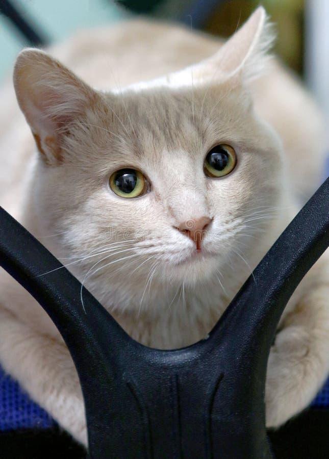 猫考虑他的艰难生活 库存图片