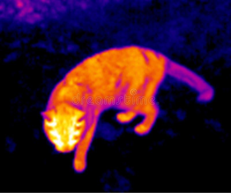 猫自计温度计 图库摄影