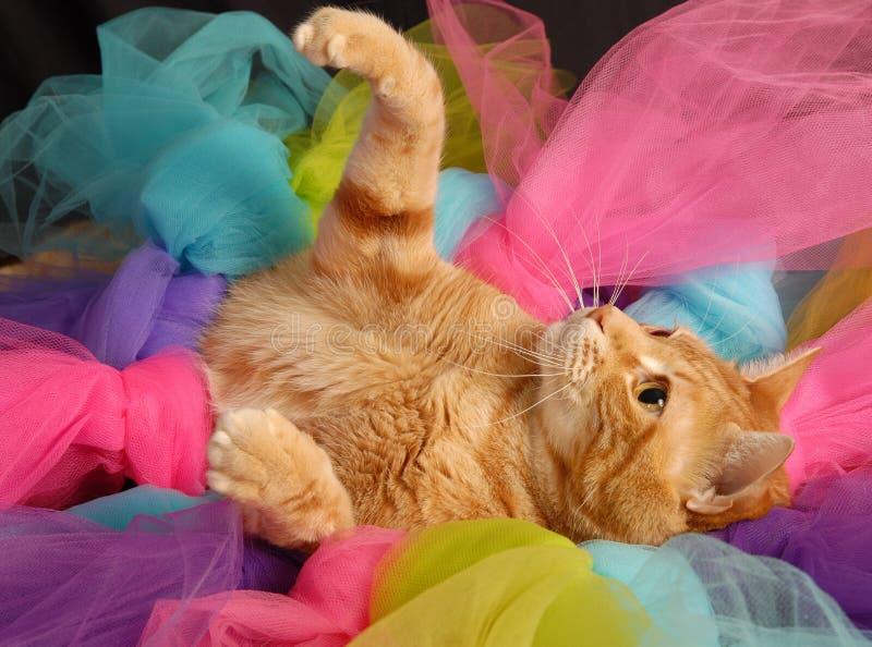 猫芭蕾舞短裙6 免版税库存图片