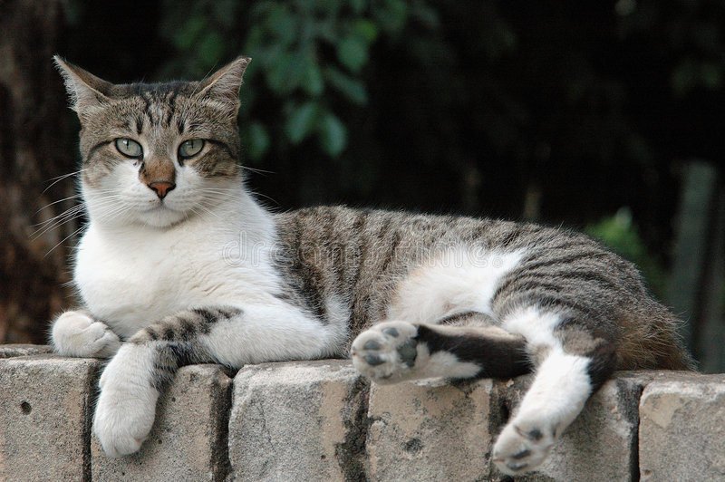 猫街道 免版税库存图片