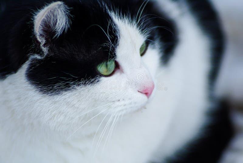 猫被注视的绿色 库存照片