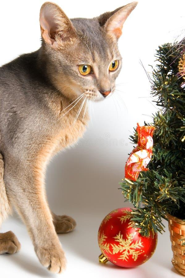 Download 猫见面新年度 库存照片. 图片 包括有 嬉戏, 紫色, 国内, beautifuler, 装饰, 闪烁, 多梦 - 3667464