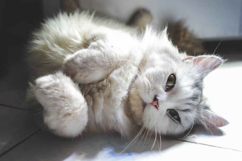 猫观看 库存照片