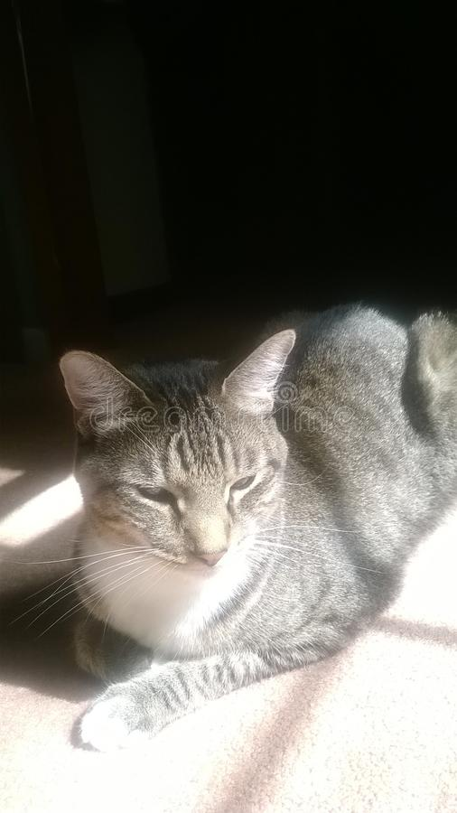 猫规则 免版税库存照片